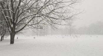 Winter-2020-Quilchena_Park_IMG-20200115-WA0000